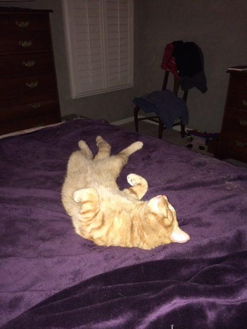 6.8.16 Ringo the Cat